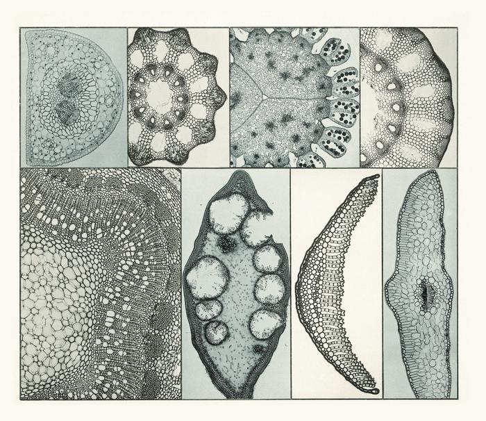 historische mikroskopische Fotografien Buchgestaltung