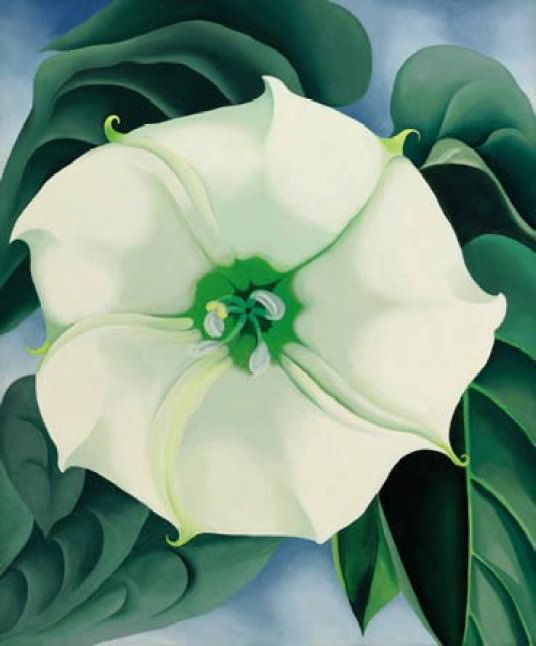 Georgia O'Keeffe's Blumenbild Jimson Weed/White Flower No. 1