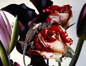 Nobuyoshi Araki - Flowers and More