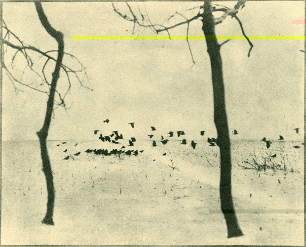 PICTORIALISM: Hidden Modernism. Photography 1896-1916