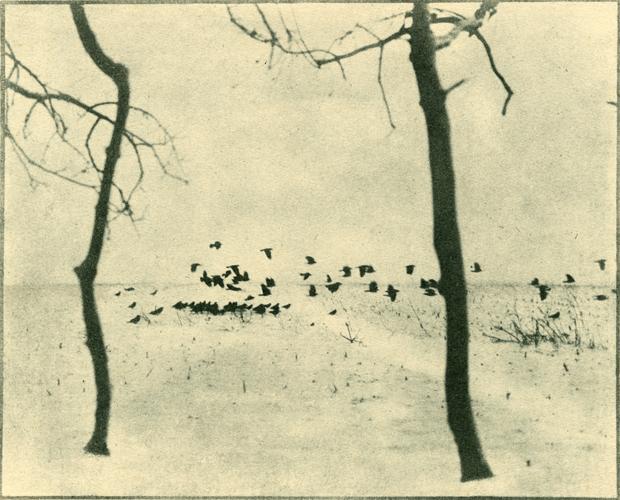 PICTORIALISM: Hidden Modernism. Photography 1896-1916 Ausstellung Berlin