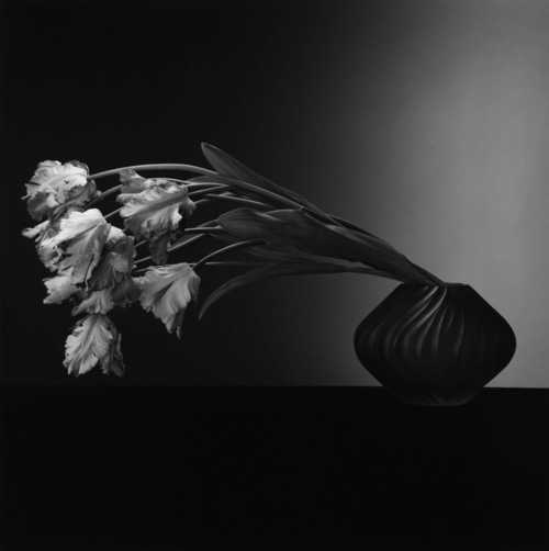 Robert Mapplethorpe Retrospektive in Düsseldorf