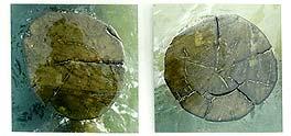 HOLZSCHNITT - Fotografien von Iris vom Stein