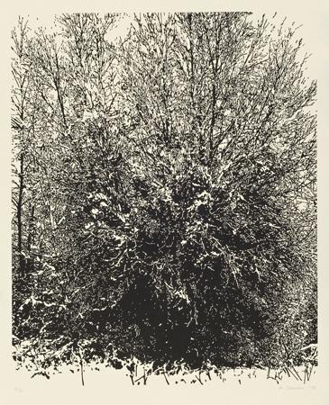 Schneewaldschnitte