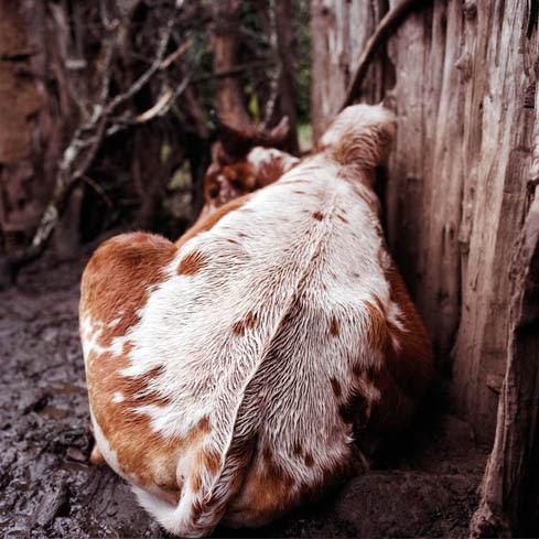 Close up Ethiopia , eine Fotoausstellung