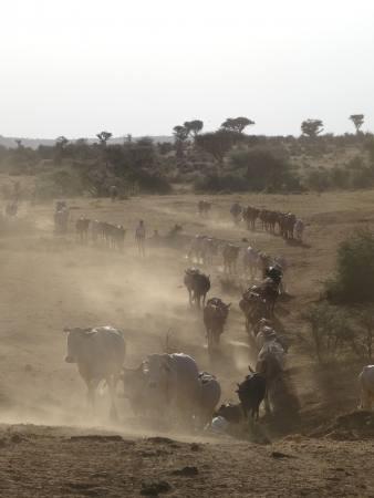Getting Closer. Annährungen an den Klimawandel in Ostafrika Ausstellung Koeln