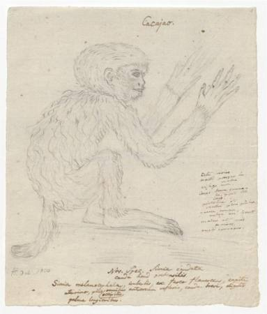 Das zeichnerische Werk - Alexander von Humboldt Buchpräsentation Ausstellung Berlin