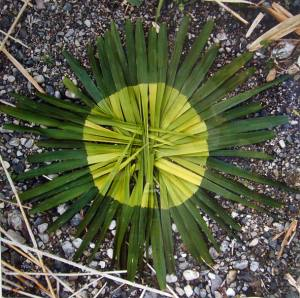 Andy Goldsworthy - Works from the 80
