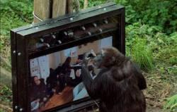 Nonhuman Subjectivities. On Animals. Cognition, Senses, Play