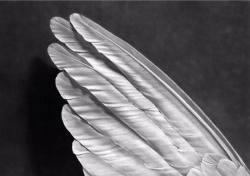 Robert Longo Angel´s Wing
