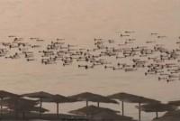 Spencer Tunick Nackte in Israel und der Salzsee